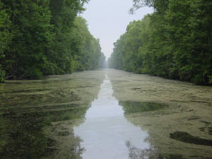 Great Dismal Swamp & South Mills.jpg