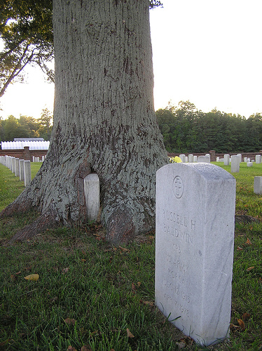 100 Year Old Tree Cold Harbor Civil War Battle.jpg